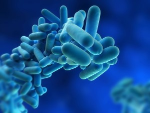 Risk Assessment for Legionella Bacteria